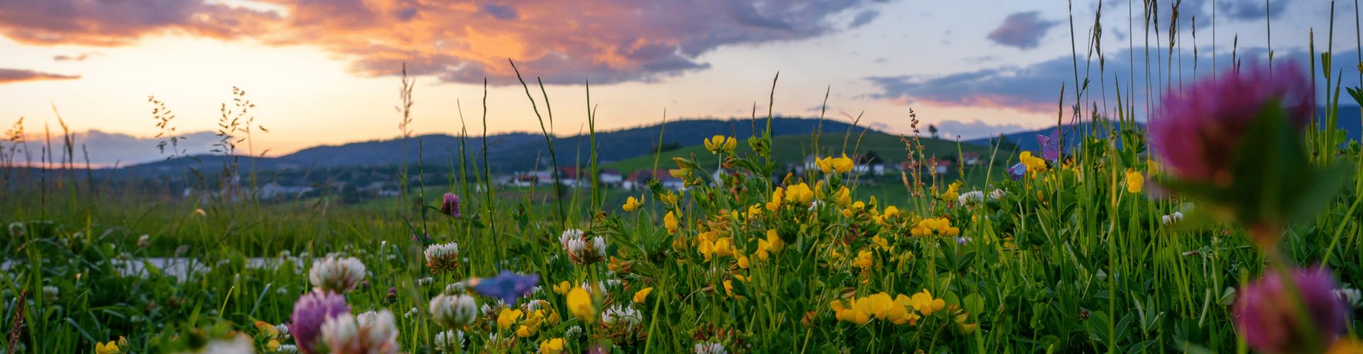 Sonnenuntergang bei Hautzenberg