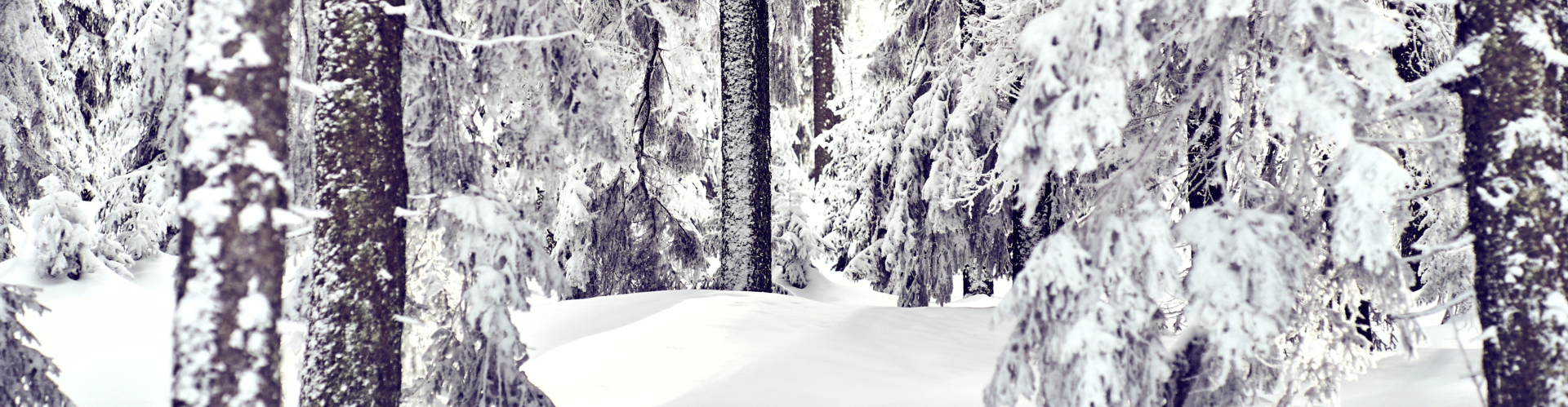 Winterlandschaft am Falkenstein